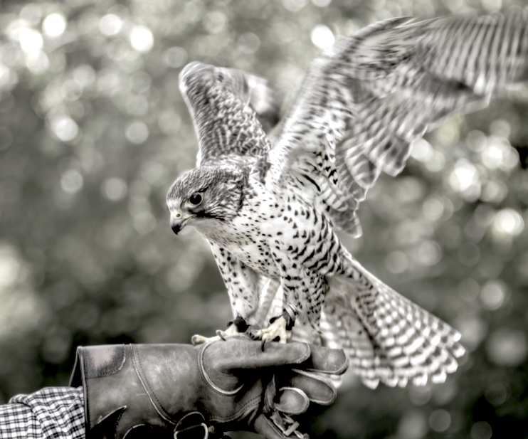 London Falconry Experiences