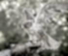 London Woodland Falconry Experience