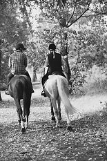 Horse riding in the Royal Crown Estates, London Horse Riding