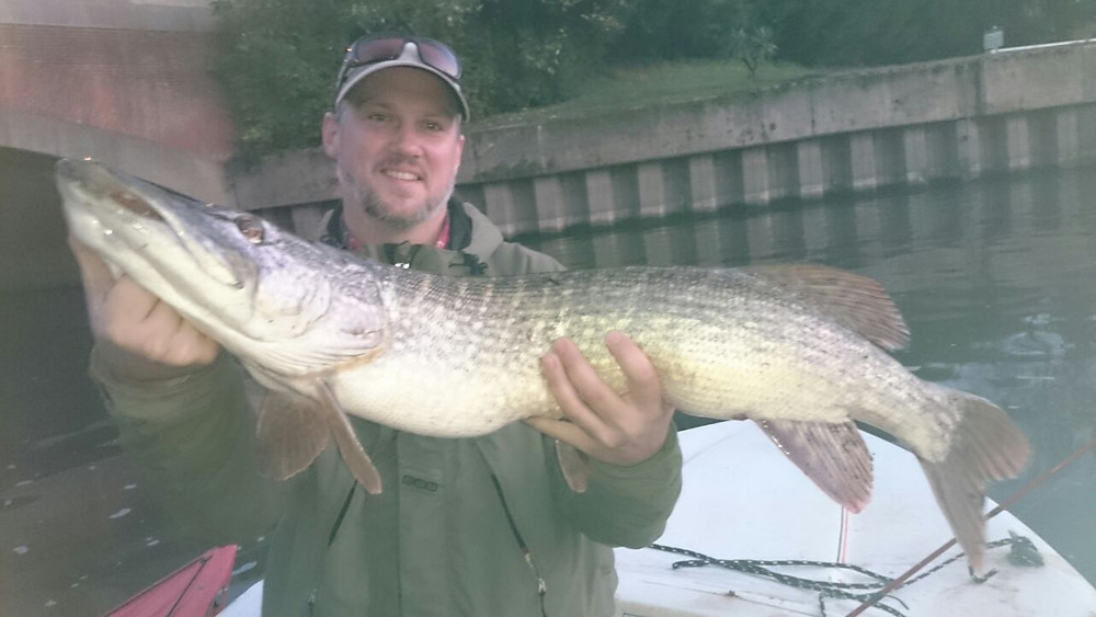 Lovely River Thames Pike, Caught on live bait. London