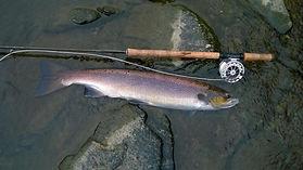 Salmon Fishing near London