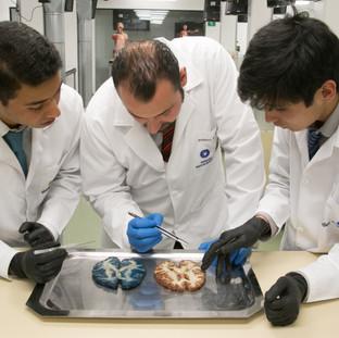 Estudiantes del Semillero de Investigación en Anatomía discutiendo apartes de tinciones encefálicas con el Dr. Roberto Rueda.