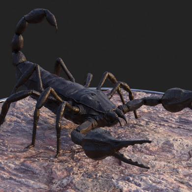 Alligator Scorpion Black Right