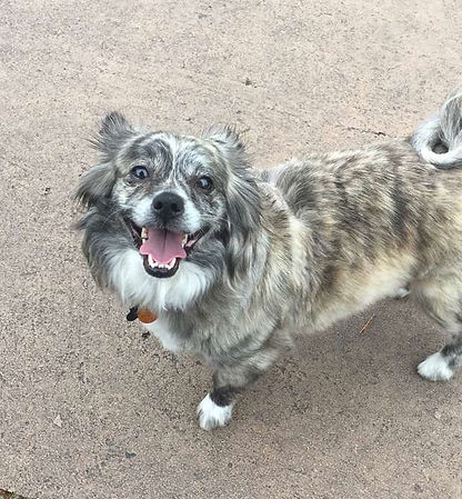 Kahlua smiling at the park