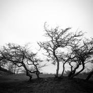 Träden på Lilla Vik