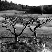 Träden på Djupadal
