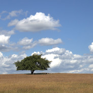 Havängsensammaträd