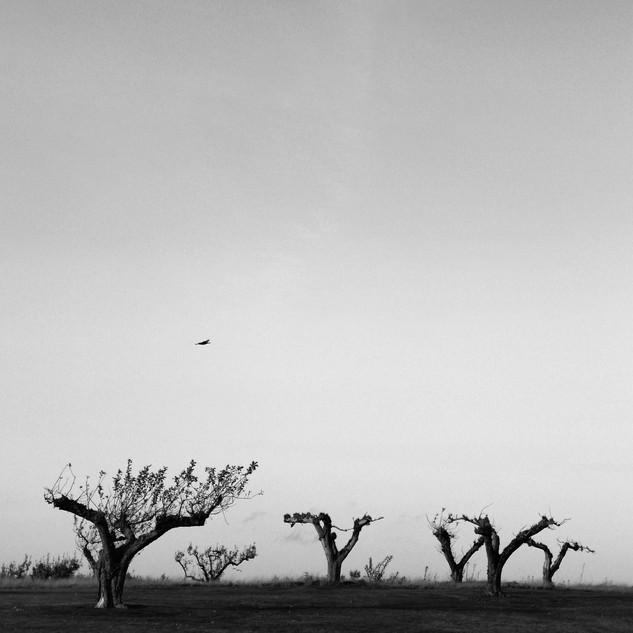 Fågeln på Djupadal