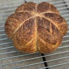 לחם מחצת (שאור) פרח.JPG