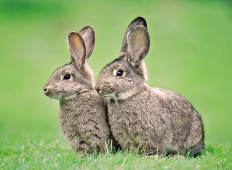 Rabbit's lesson