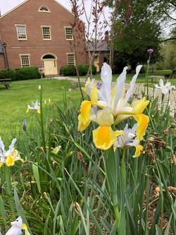 Daffodils & DayDreams