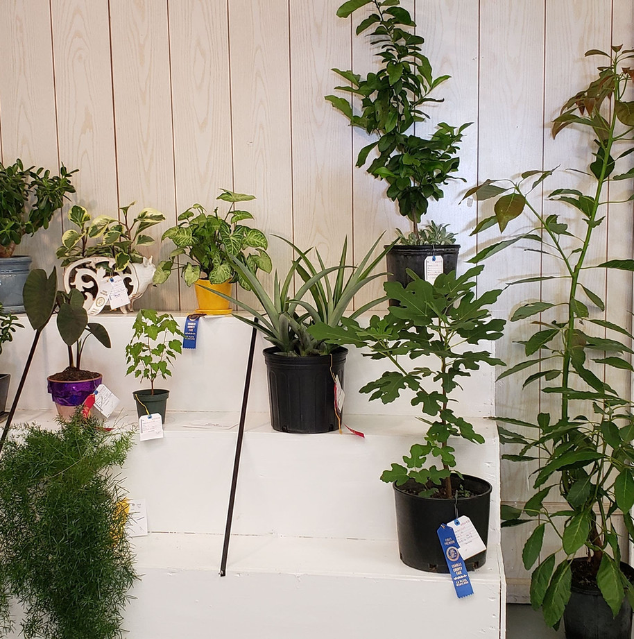 POTTED PLANTS IN BACK.jpg