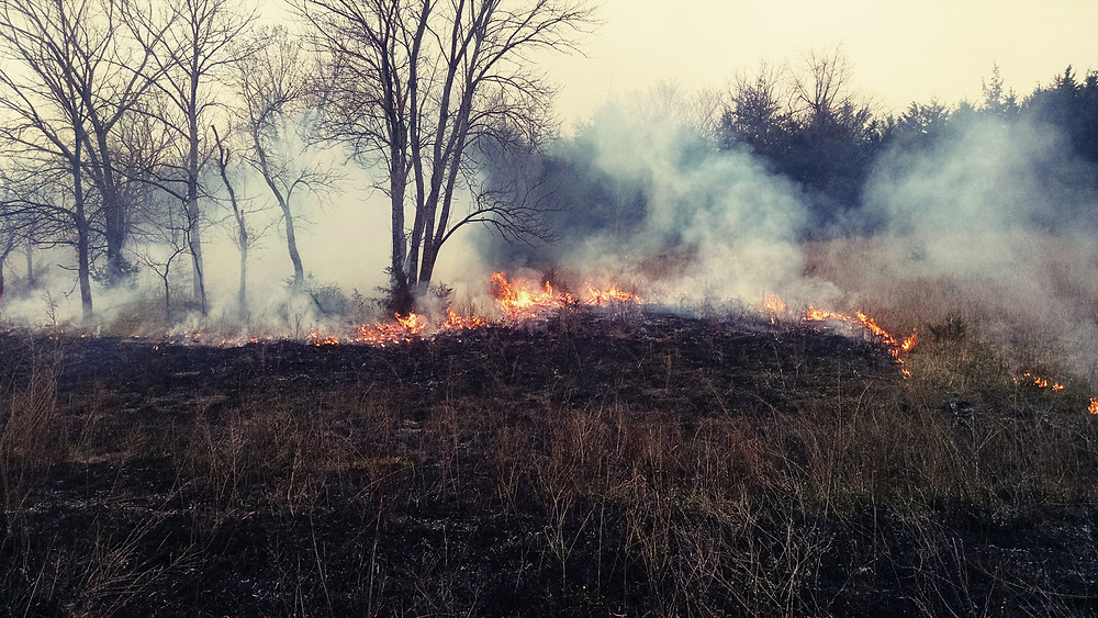 Burning on our property to kill the small cedar trees