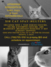 Petsmart Cats 2019.jpg