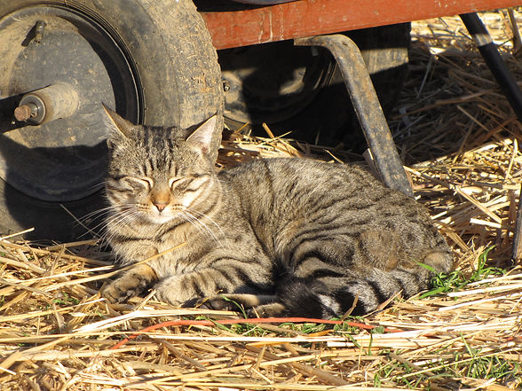 Barn Cat Program | sshs-updated
