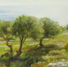 Olive Grove by the Sea 2019