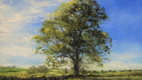 Summer Oak, Dorset 2021 Oils on Art Board 28 by 36cm £575