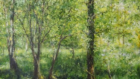 Oak Copse, Summer Light 48 by 59cm £950