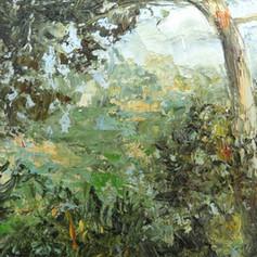 Meditteranean Pine, 2020
