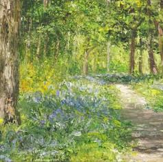 Bluebell Wood, 2019