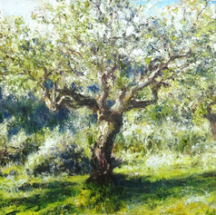Olive Grove After the Shower 2020
