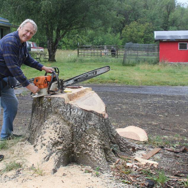 Me with chainsaw on Pin Oak.696rC192.JPG