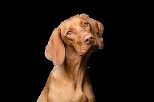weimerana-with-tilting-head-behaviourist