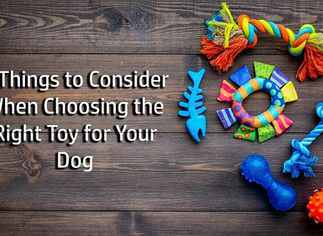 4 Things to Consider When Choosing the Right Toy for Your Dog