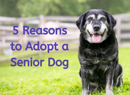 5 Reasons to Adopt a Senior Dog
