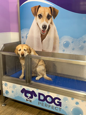 Dog wash DOGPerfect.jpg
