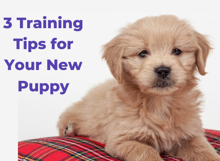 3 Training Tips for Your New Puppy