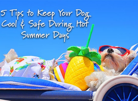 5 Tips to Keep Your Dog Cool & Safe During Hot Summer Days