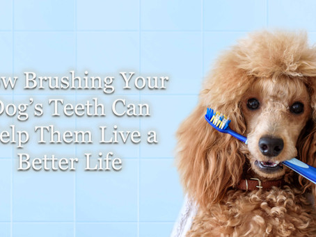 How Brushing Your Dog's Teeth Can Help Them Live a Better Life