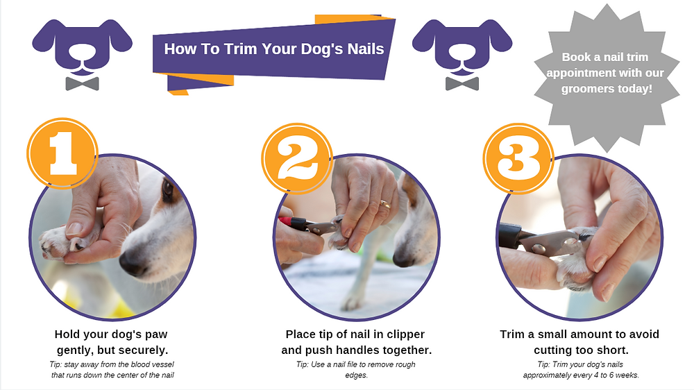 Dog Nail Trimming 101