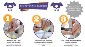 Dog Nail Trimming 101
