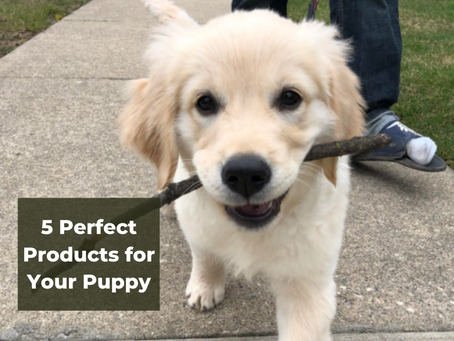 5 Perfect Products for Your Puppy