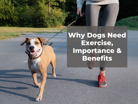 Why Dogs Need Exercise, Importance & Benefits