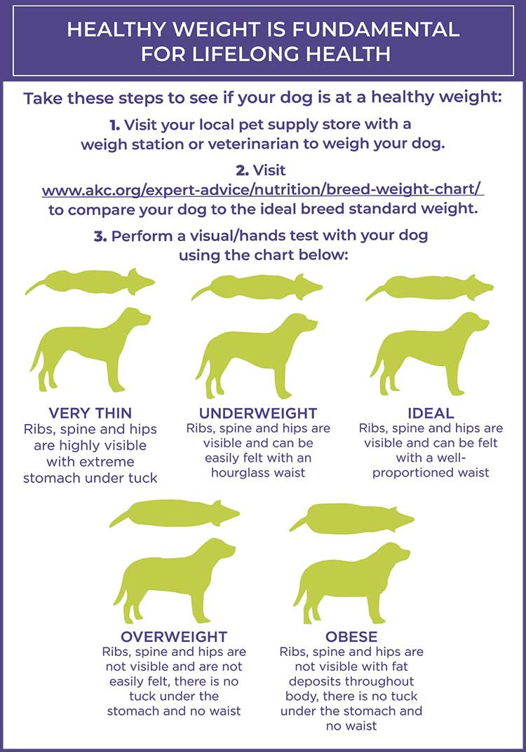 DOGPerfect's Healthy Weight Chart