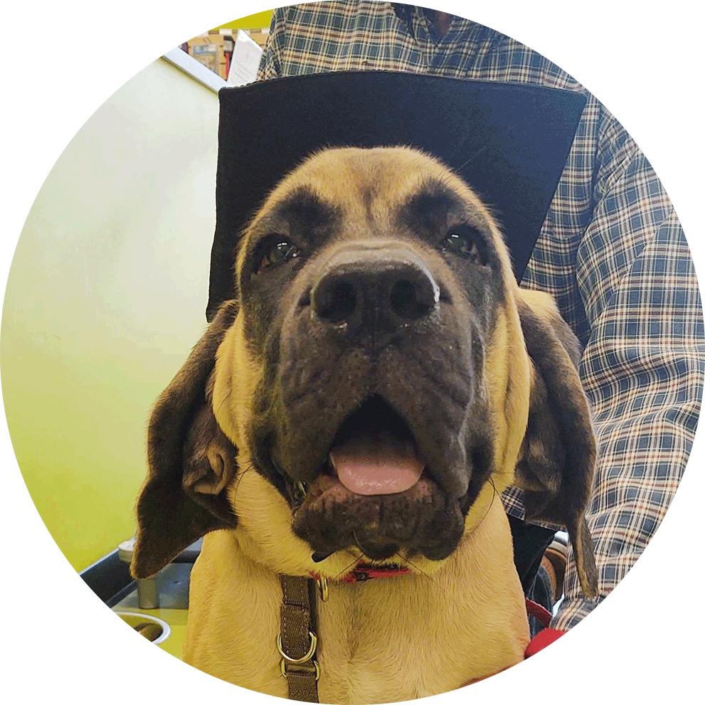 Puppy Graduate DOGPerfect Training