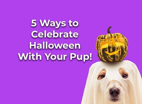 5 Ways to Celebrate Halloween with Your Pup!