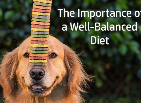 The Importance of a Well-Balanced Diet