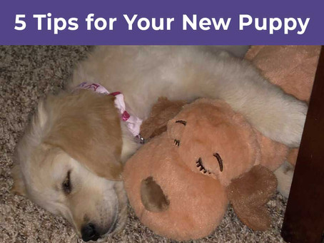 5 Tips for Your New Puppy