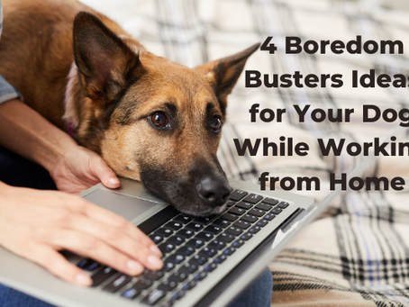 4 Boredom Buster Ideas for Your Dog While Working From Home