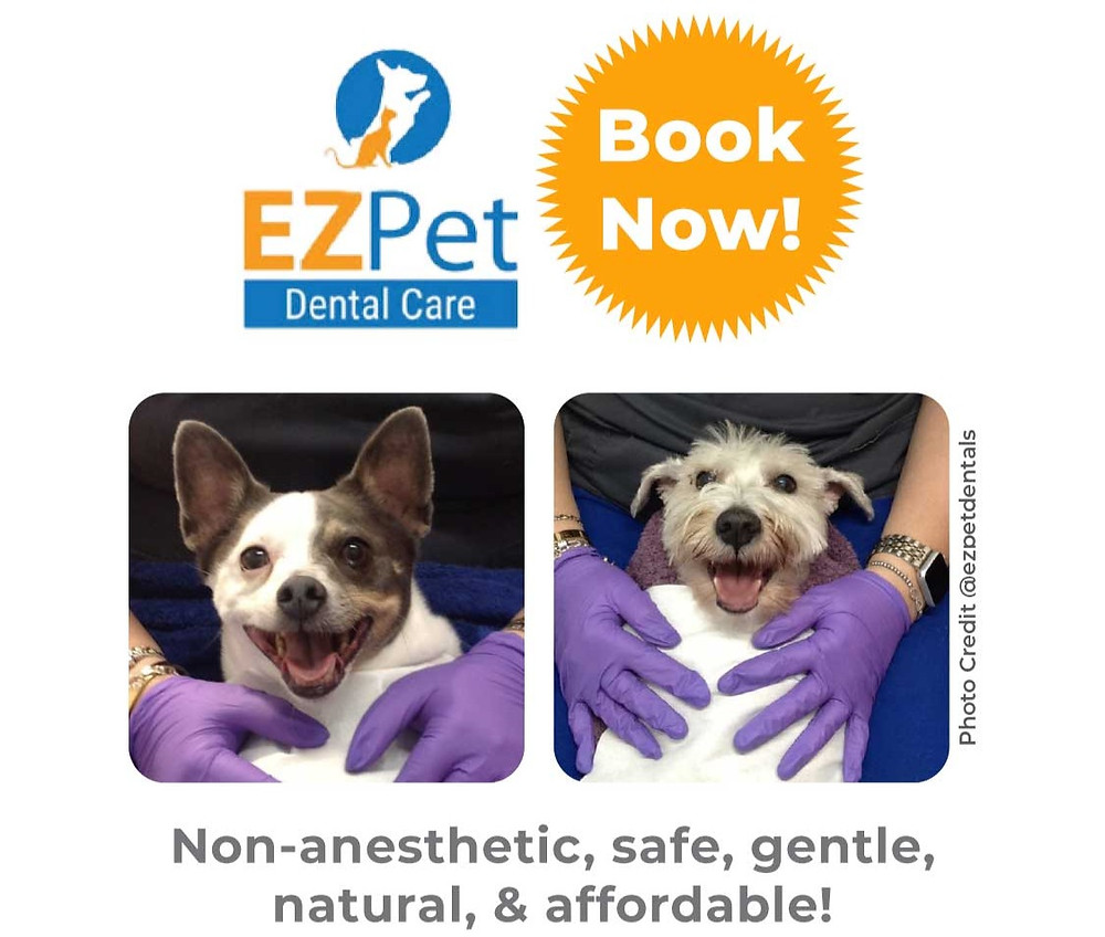 Non-anesthetic pet dental cleaning service