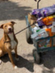 Mila from Canine Castaways