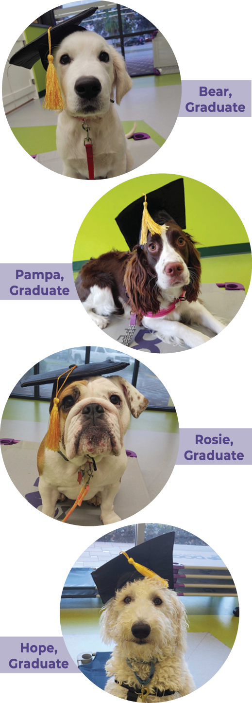 DOGPerfect's Dog Training Graduates