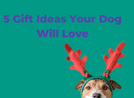 5 Gift Ideas Your Dog Will Love
