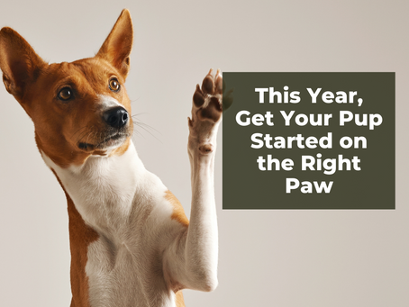 This Year, Get Your Pup Started on the Right Paw