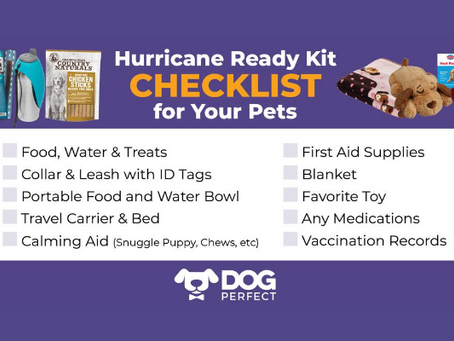 Hurricane Ready Kit Checklist for Your Pets