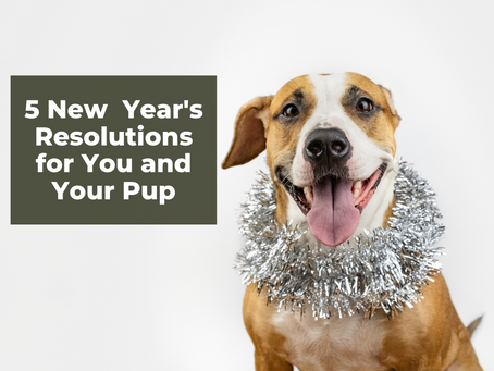 5 New Year's Resolutions for You and Your Pup